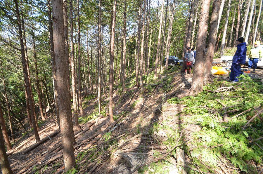 作業前の現場風景。間伐材が転がっている。